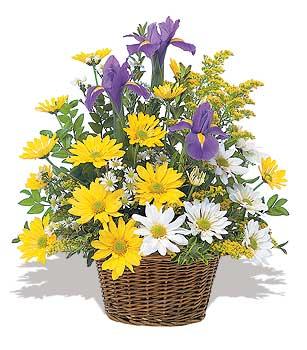 sari ve beyaz krizantemler   Kars çiçek siparişi sitesi