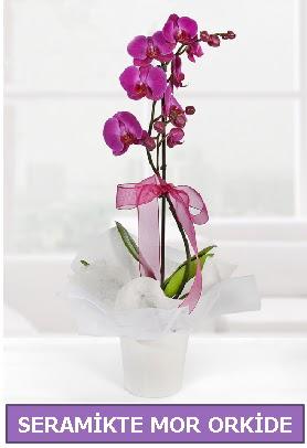 Seramik içerisinde birinci kalite tek dallı mor orkide  Kars cicek , cicekci