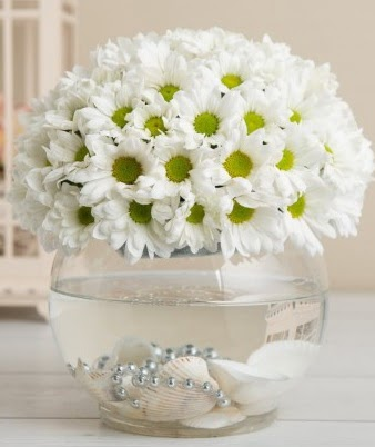 Fanusta beyaz Papatya  Kars hediye sevgilime hediye çiçek