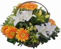Kars çiçek siparişi vermek  sepet modeli Gerbera kazablanka sepet