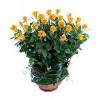 Kars çiçek gönderme  10 adet sari gül tanzim cam yada mika vazoda çiçek