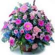 karisik mevsim kir çiçekleri  Kars cicekciler , cicek siparisi
