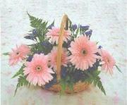 gerbera çiçeklerinde sepet   Kars uluslararası çiçek gönderme