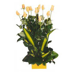 12 adet beyaz gül aranjmani  Kars internetten çiçek satışı