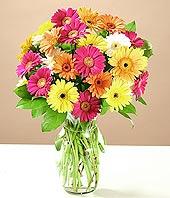 Kars hediye çiçek yolla  17 adet karisik gerbera