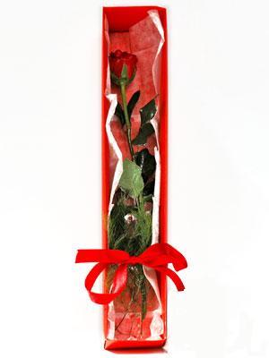 Kars internetten çiçek siparişi  1 adet kutuda gül