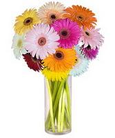 Kars çiçek yolla , çiçek gönder , çiçekçi   Farkli renklerde 15 adet gerbera çiçegi