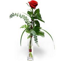 Kars çiçek satışı  Sana deger veriyorum bir adet gül cam yada mika vazoda