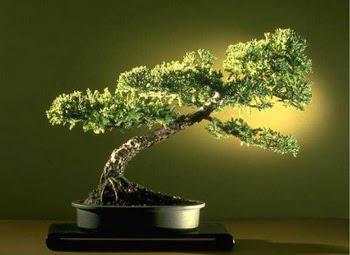 ithal bonsai saksi çiçegi  Kars kaliteli taze ve ucuz çiçekler