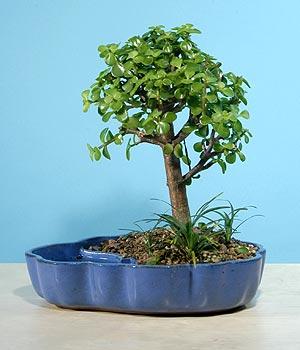 ithal bonsai saksi çiçegi  Kars online çiçekçi , çiçek siparişi