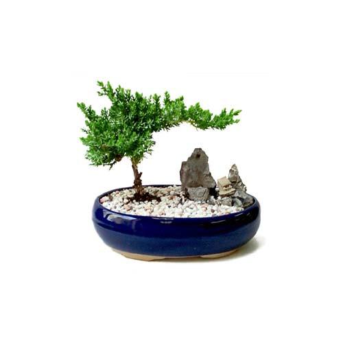 ithal bonsai saksi çiçegi  Kars 14 şubat sevgililer günü çiçek