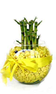 cam fanus içerisinde bambo  Kars yurtiçi ve yurtdışı çiçek siparişi