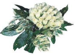 Kars çiçek yolla , çiçek gönder , çiçekçi   9 Beyaz gül Özel kisiler için