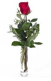 Vazo içerisinde 1 adet kirmizi gül  Kars çiçek gönderme