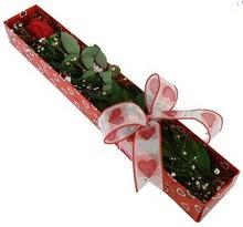 Tek kirmizi gül kutu içerisinde  Kars çiçekçiler