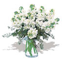 Kars çiçek yolla  Vazoda beyaz güzel sebboylar