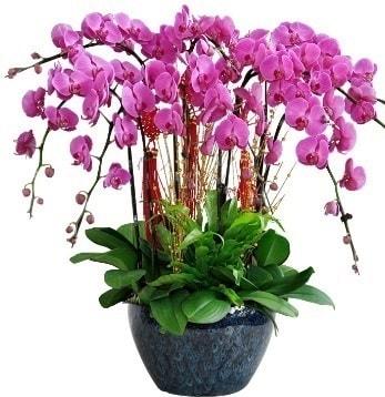 9 dallı mor orkide  Kars çiçek satışı