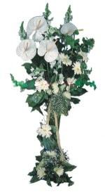 Kars çiçek siparişi sitesi  antoryumlarin büyüsü özel