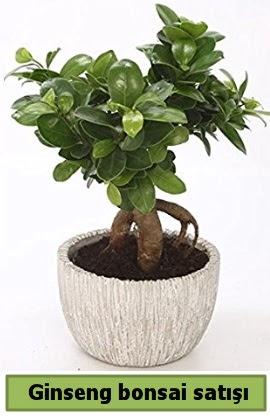 Ginseng bonsai japon ağacı satışı  Kars anneler günü çiçek yolla