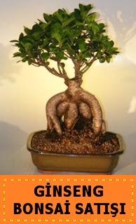 Ginseng bonsai satışı japon ağacı  Kars çiçek yolla