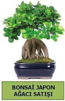 Bonsai japon ağacı satışı  Kars hediye sevgilime hediye çiçek