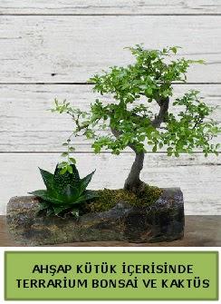 Ahşap kütük bonsai kaktüs teraryum  Kars çiçek yolla , çiçek gönder , çiçekçi