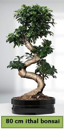 80 cm özel saksıda bonsai bitkisi  Kars anneler günü çiçek yolla