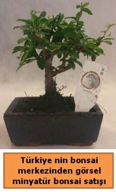 Japon ağacı bonsai satışı ithal görsel  Kars uluslararası çiçek gönderme