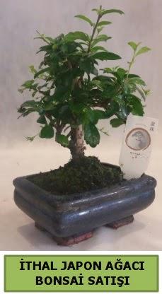İthal japon ağacı bonsai bitkisi satışı  Kars anneler günü çiçek yolla