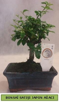 Minyatür bonsai ağacı satışı  Kars 14 şubat sevgililer günü çiçek