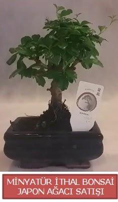 Küçük görsel bonsai japon ağacı bitkisi  Kars çiçek online çiçek siparişi