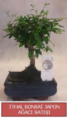 İthal küçük boy minyatür bonsai ağaç bitkisi  Kars anneler günü çiçek yolla