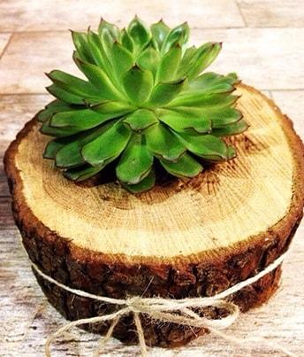 Doğal kütük içerisinde sukulent kaktüs  Kars hediye sevgilime hediye çiçek