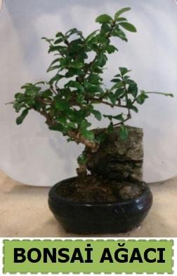 Bonsai ağacı japon ağacı satışı  Kars çiçek mağazası , çiçekçi adresleri