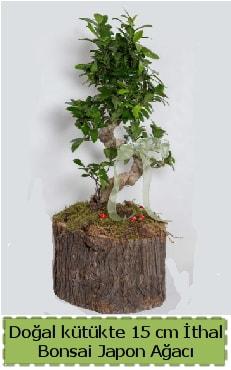 Doğal kütükte İthal bonsai japon ağacı  Kars 14 şubat sevgililer günü çiçek