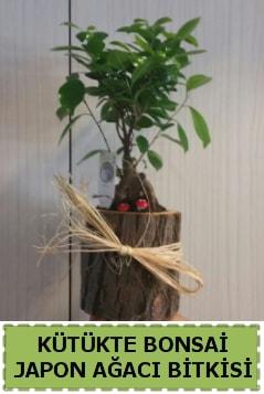 Kütük içerisinde doğal bonsai ağacı  Kars anneler günü çiçek yolla