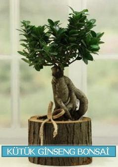 Kütük ağaç içerisinde ginseng bonsai  Kars cicekciler , cicek siparisi