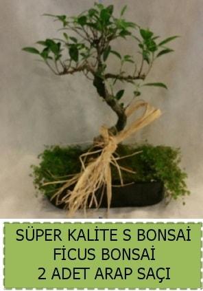 Ficus S Bonsai ve arap saçı  Kars anneler günü çiçek yolla
