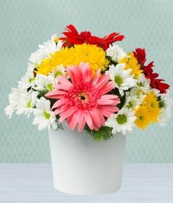 Seramik Vazoda Gelbera ve Papatya  Kars 14 şubat sevgililer günü çiçek