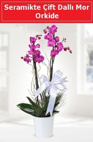Seramikte Çift Dallı Mor Orkide  Kars çiçek , çiçekçi , çiçekçilik